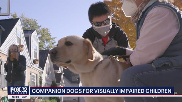 Chicago non-profit pairing visually impaired children with companion dogs