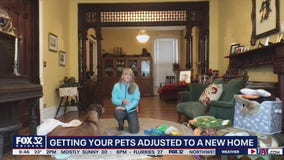 How to help your pets get adjusted to a new home