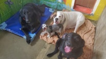 'They've lost everything': 4 dogs who lost both owners to COVID-19 need new home