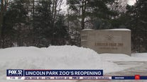 Lincoln Park Zoo prepares for reopening