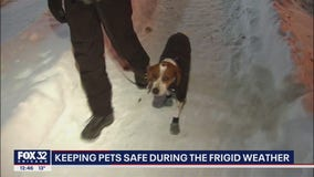 Tips for keeping pets safe during bitter cold snap