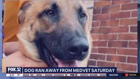 Owner of 2-year-old German Shepherd searching for her dog after he escaped Avondale vet