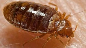 Chicago tops list of US cities for bed bug infestations, company says