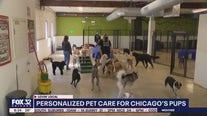 Lovin' Local: Canine Crews