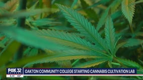 Oakton Community College starting cannabis cultivation lab