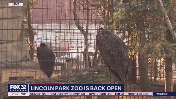 Lincoln Park Zoo reopens with new safety guidelines