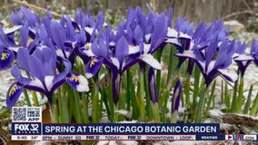 Chicago Botanic Garden welcomes spring after blustery winter