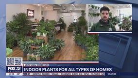 Lovin' Local: Chicago Plants in Wicker Park