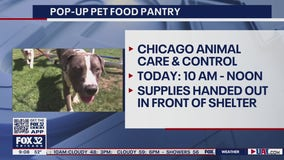 Free pet food, supplies available Friday at Pilsen pop-up