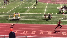 Dog 'wins' high school relay race after interrupting track meet, outrunning athletes