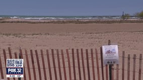 Montrose Beach Dunes fenced off to protect endangered piping plovers