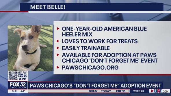 PAWS Chicago hosting 'Don't Forget Me' adoption event