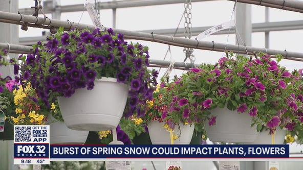 Burst of cold, spring snow on Tuesday could impact plants, flowers