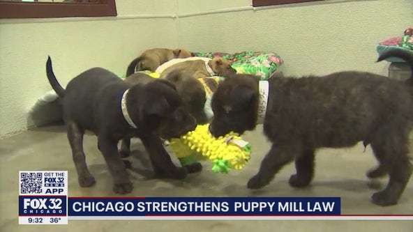 Chicago to shut down last few shops in the city allowing the retail sale of dogs