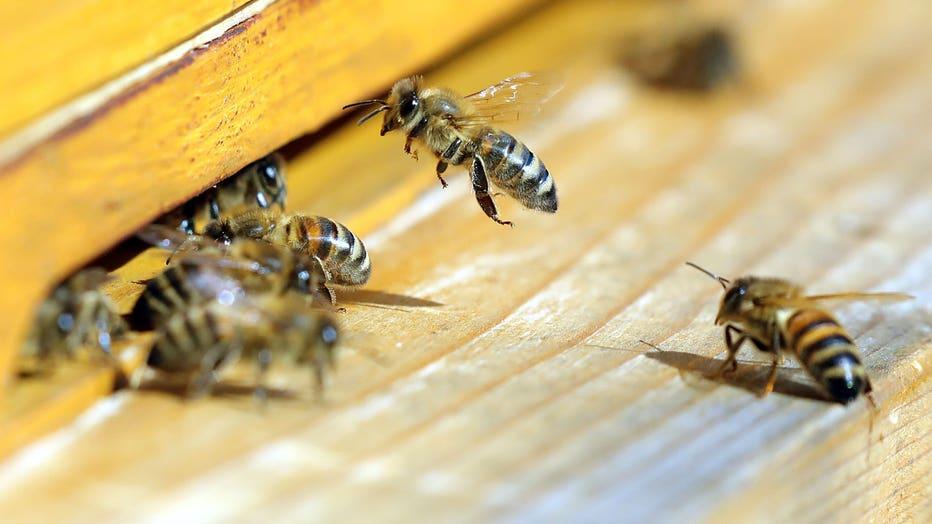 3f72e3c4-bees.jpg