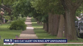 Possible 'big cat' sighting in Chicago unfounded following search by animal care and control