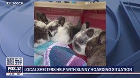 47 rabbits found inside Schaumburg long-term hotel