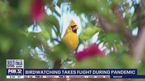 Birdwatching becoming a popular pastime during the pandemic