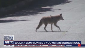 Coyote attack spooks SW suburban residents