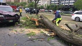 Wind knocks down tree branch onto car on Lake Shore Drive