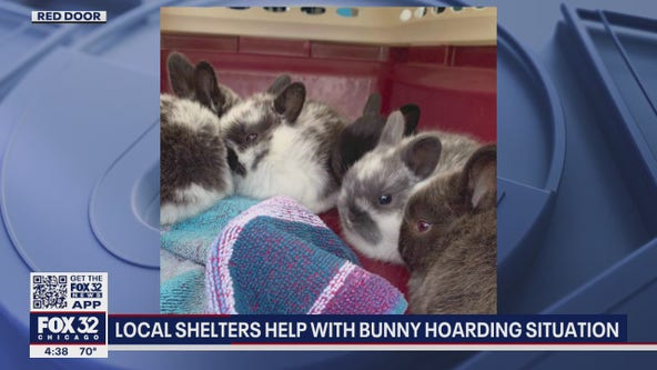 47 rabbits found inside Schaumburg long-term hotel