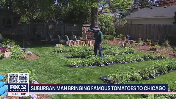 Suburban man bringing famous tomatoes to Chicago