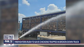 After truck breaks down, Addison firefighters hose down chickens to keep them cool in the heat