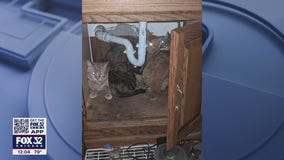 Abandoned cats saved from hoarder home in McHenry County