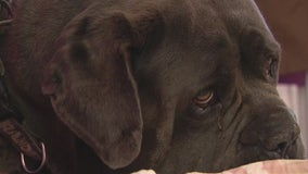 Dog shot twice by a LA County deputy during search warrant at neighbor's home
