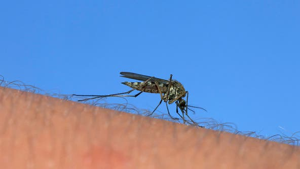 West Nile Virus found in McHenry County mosquitos