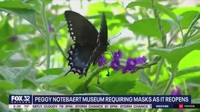 Peggy Notebaert Nature Museum set to reopen Thursday
