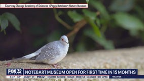 Peggy Notebaert Museum reopening for first time in 15 months