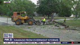 Cleanup begins after overnight storms down trees in Zion