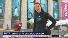 Learn about Shedd ambassador animals and hear from a caretaker
