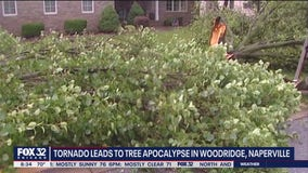 Tornado causes 'tree apocalypse' in Naperville and Woodridge; loss could have aftereffects for years