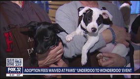 PAWS Chicago waiving adoption fees for 'underdogs' this weekend