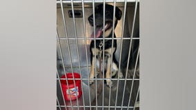 Owner charged with animal cruelty after dog rescued from hot car in Aurora