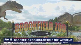 Brookfield Zoo to hold summer job fair this weekend