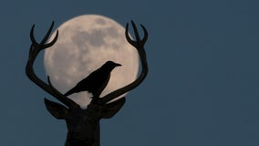 Buck moon: When to see July 2021's full moon and why it may look red