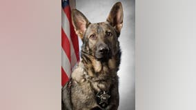 Gurnee police K9 retires after 7 years of service