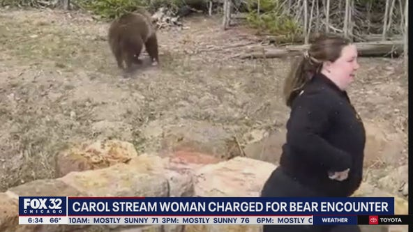 Carol Stream woman faces charges in Yellowstone bear encounter