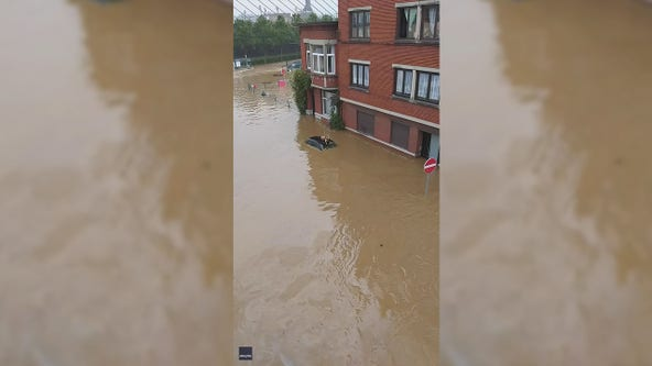 Video: Dogs rescued from deadly European floodwater