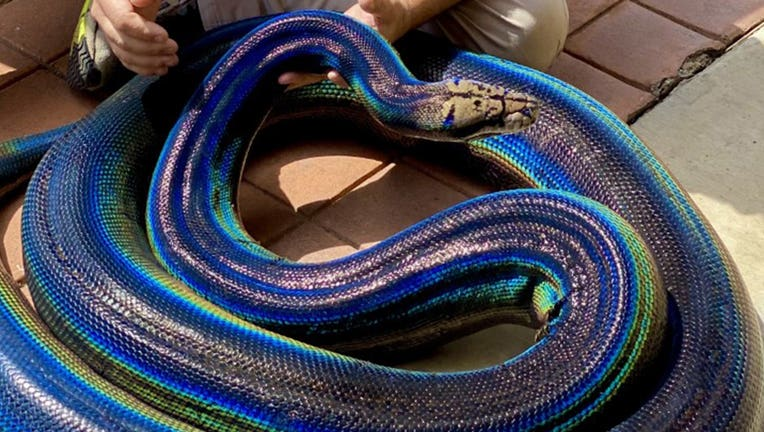 MyLove-the-snake-crop-3-Courtesy-of-Jay-Brewer