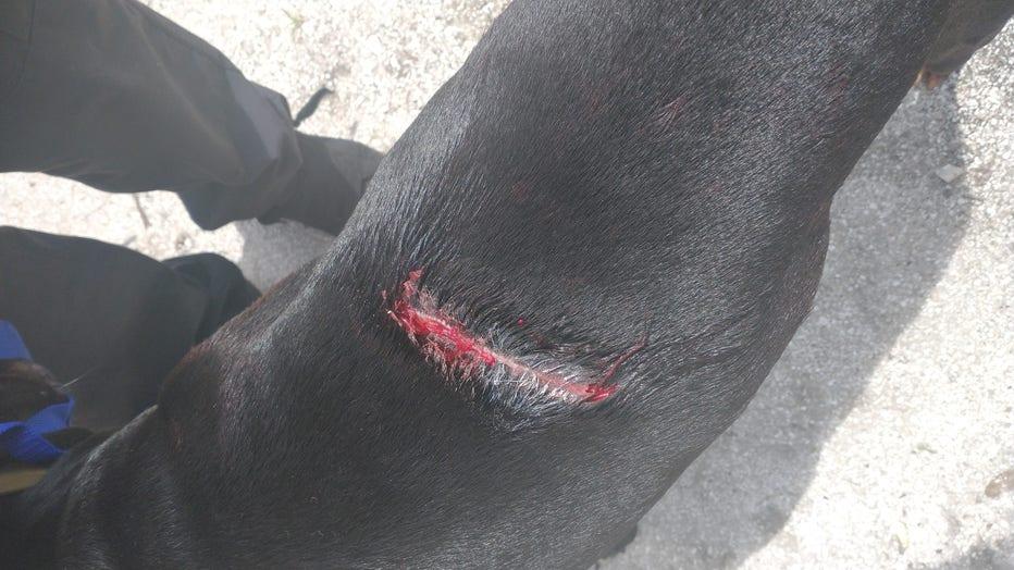dog_injury_1.jpg
