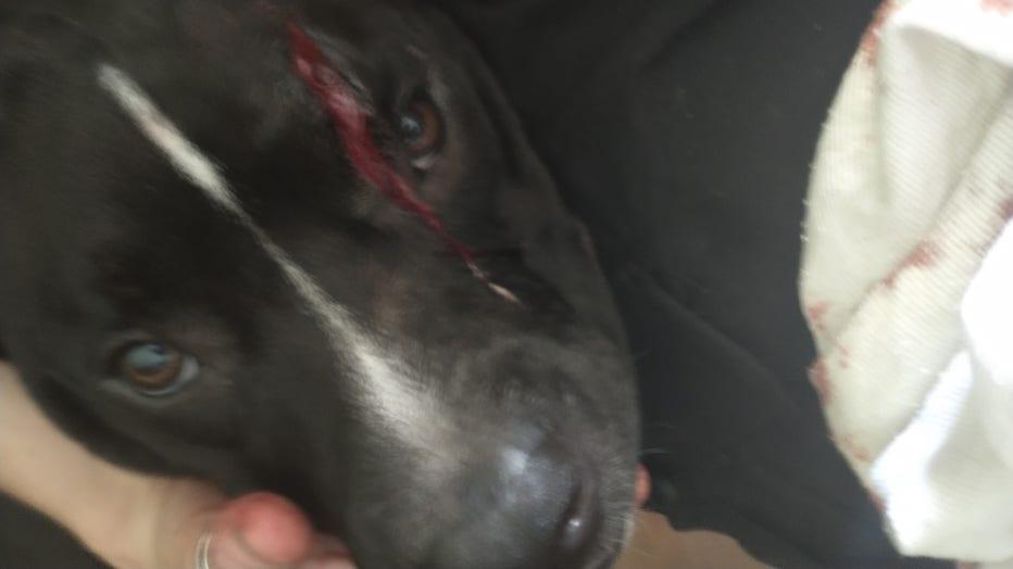 dog_injury_2.jpg