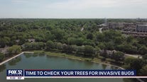 Time to check your trees for invasive bugs