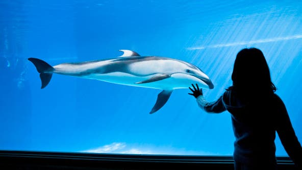Shedd Aquarium free days return in August with 4 dates for Illinois residents