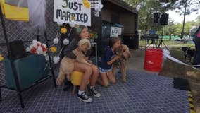 Suburban community almost takes Guinness World Record for Largest Dog Wedding Ceremony