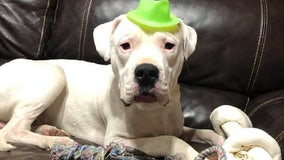 'Justice for Ludwig' group to hold vigil Sunday for pet dog shot dead in the suburbs