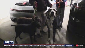 Owner reunited with dogs after doggie daycare van was stolen from Lake View with pets inside